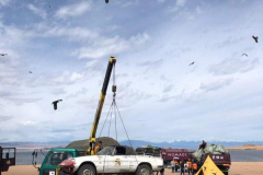Car-76-Alfa-towing