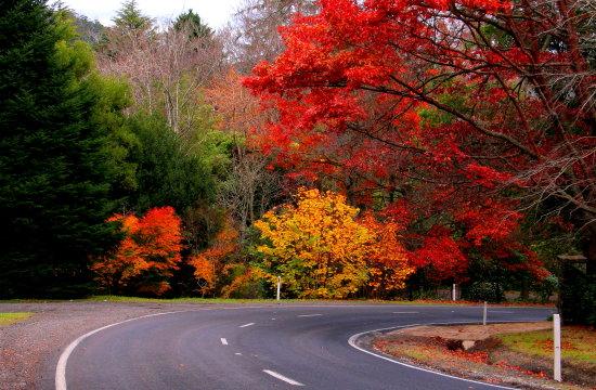 Autumn Leaves in Mt Macedon